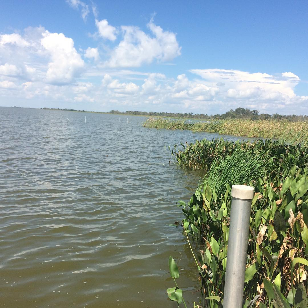 Lake Apopka North Shore: The History Of Agriculture On Lake Apopka: Birds